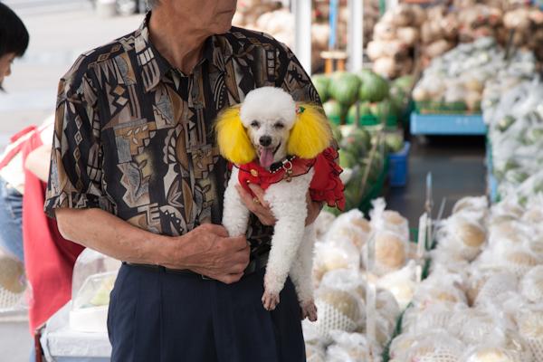 Pudel mit gelben Ohren und rotem Kleid